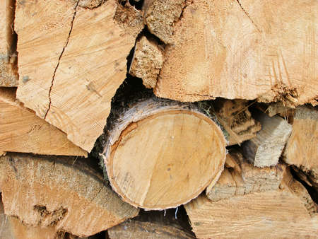 firewood pieces of sawn tree trunks