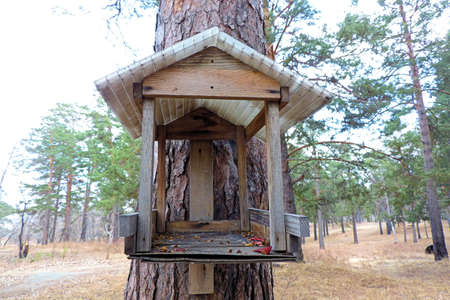 birdhouse for feeding birds in a Park or in a pine forest a cozy nice house for birds Sparrow crossbill or chickadee Banque d'images