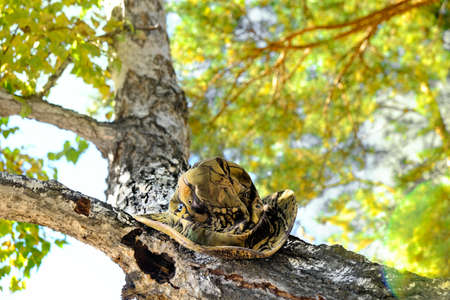 Autumn forest scene, camouflage hat on trunk of tree. Traveling, camping, hunting.