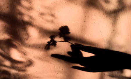 Blurred shadow of female hand holding twig with leaves on grunge wall background with lace flower pattern. Abstract, play of light and shadow, natural light, shadow play illusion concept