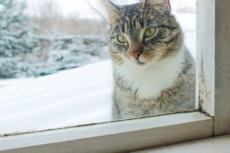 winter has come, the cat outside the window asks for a warm home.