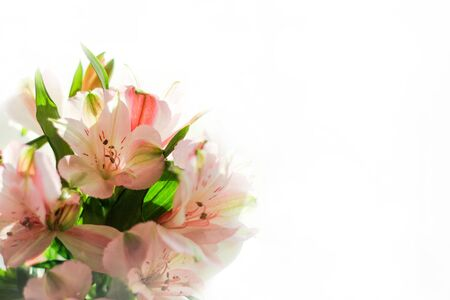 a bouquet of pink delicate flowers on a white background. The concept of a romantic gift. Banco de Imagens