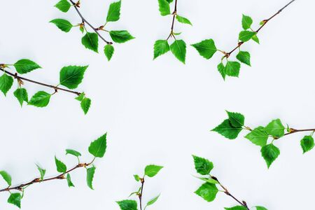 Background of the branches of the birch with young leaves on a light background Stock Photo