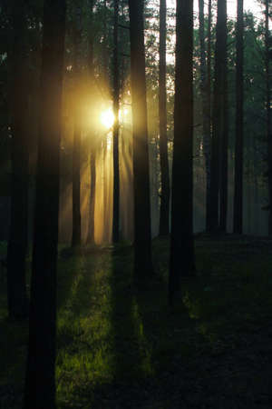 the sun's rays break through the trees in the forest.