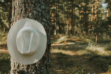 summer hat on a tree branch in the summer forest. outdoor recreation, tourism Banco de Imagens