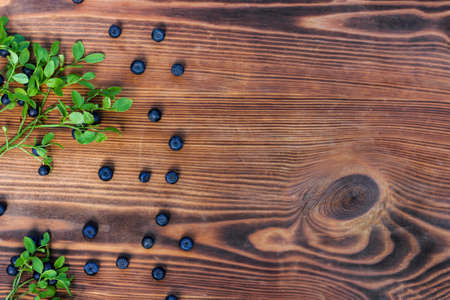Freshly picked blueberries and wild blueberry bush on old wooden background. Healthy eating,vegan food