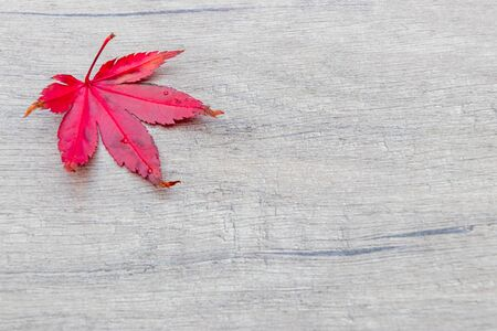 Autumn background, red maple leaf top left on wooden plate, stone plate
