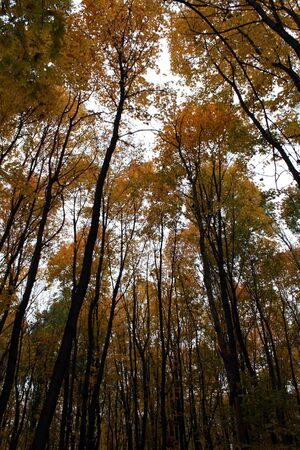 Trees in autumn forest photo