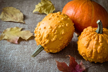 frutas secas: Autumn still life with pumpkins and leaves