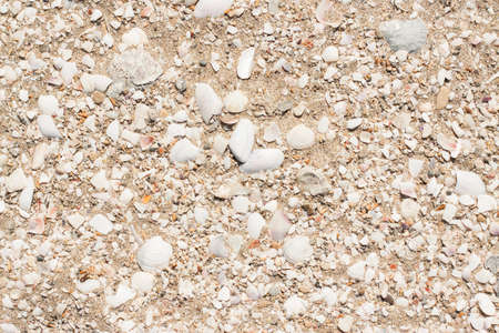 excellent background: A piece of sandy beach with small shells. Excellent background. The concept of a beach holiday, vacation, summer, etc.