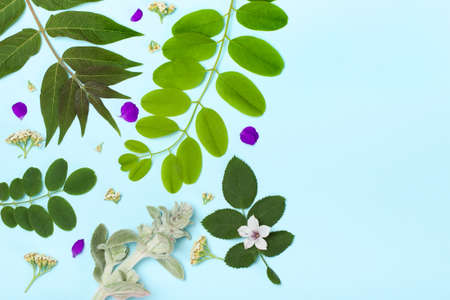 subtropical plants: Tropical pattern on a blue background. Trend background. Concept of summer, vacation, recreation, travel