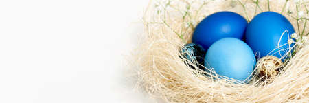 Banner with Easter eggs in blue colors in a nest. Copy space. The concept of stylish decoration for Easter, greeting cards, etc.