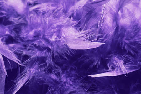Boa feathers close up. Deep violet color. The trend of the 20s style.