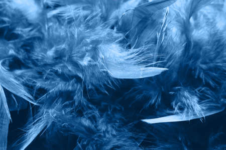 Boa feathers close up. Classic blue color. The trend of the 20s style.