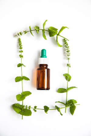 health and herbal medicine concept with green mint branches on white background,top view. Stok Fotoğraf