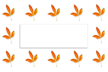 Many autumn yellow leaves isolated and white paper for text on white background