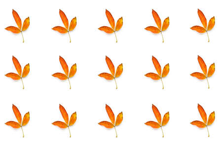 Many autumn yellow leaves isolated on white background Stok Fotoğraf