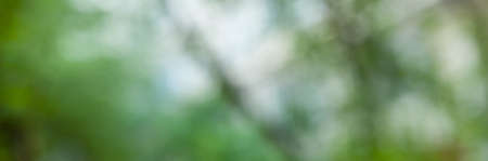 defocused image of a natural background. Branches of green trees through the sky. Summer banner