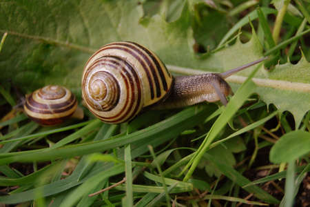 The snail on green grass