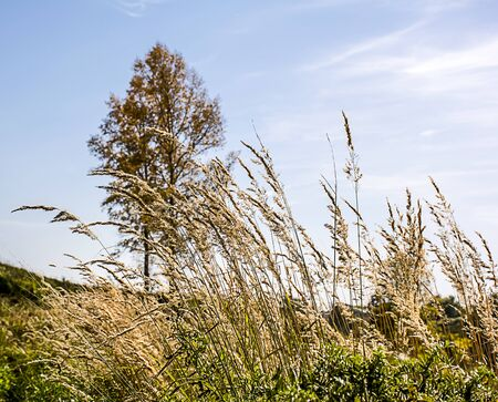 swaying: Meadow grasses swaying on the autumn wind Stock Photo