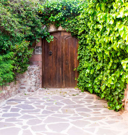 creeper: Old wooden brown door of an ivy-covered Stock Photo