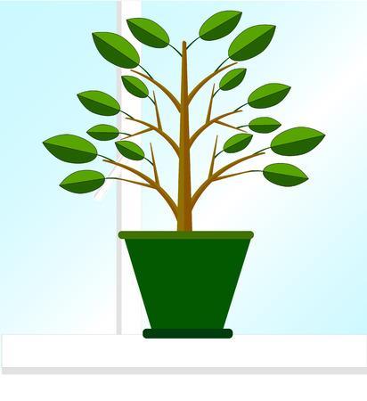windowsill: Ficus in a pot standing on a windowsill