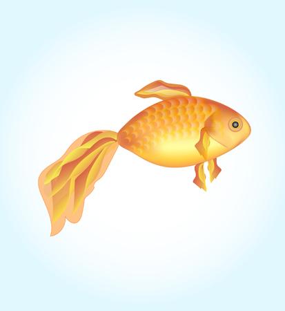 golden fish: One goldfish. Golden fish on a light background.  illustration