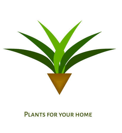 houseplant: Houseplant with leaves in a pot. vector icon for different design Illustration