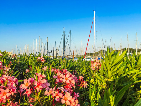 masts: Pink flowers and yachts masts. Mobile photo. Selective focus image Stock Photo