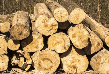 felled: Stacked logs in forest