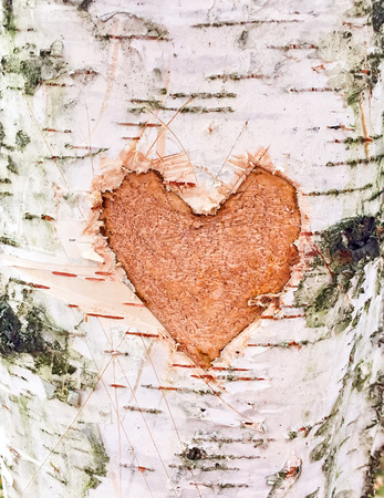 Heart carved on the bark of a birch close up Stock Photo