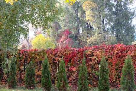 Autumn foliage in red yellow orange green