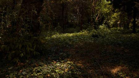 Light in the dark forest scene