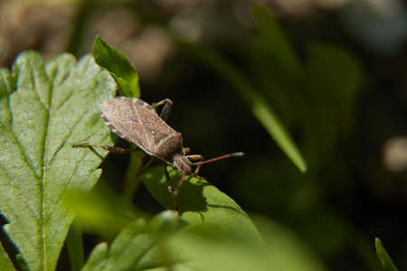 A bug stalking on the leafs