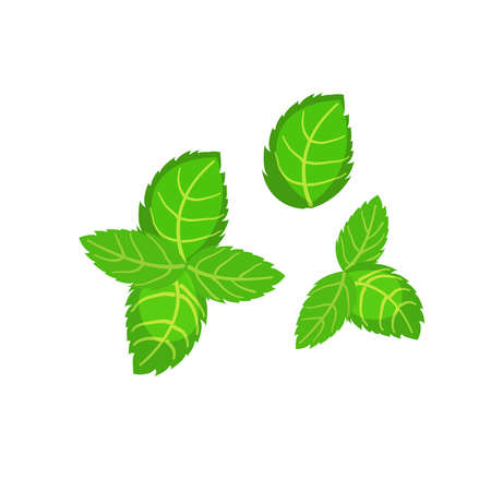 Fresh green basil leaves icon. Design element of eating for the menu, top view. Vector icon. Illustration