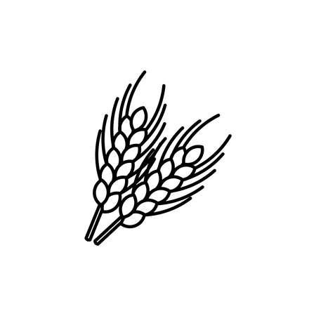 grain fields: Wheat ears thin line icon. Isolated wheat agriculture linear style for menu, label, logo. Simple vegetarian food sign.