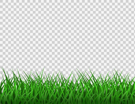 Green grass. Spring eco background. Grass border vector clipart. Stock Illustratie