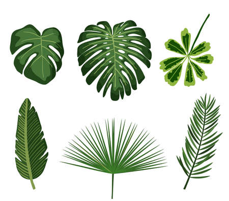 Tropical leaves. Botanical palm tropic leaf set. Vector foliage summer plant. Exotic jungle green design elements. Stock Illustratie