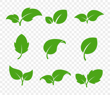Eco green foliage. Leaf eco. Vector flat icon set. Vegetarian organic plant.