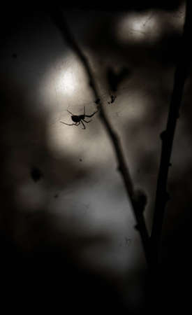 wood spider: The dark mysterious wood, on a branch of a tree sits a spider and waits for the victim, feeling of night and mysteriousness of forest inhabitants