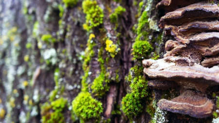 parasites: the old large dark gray stump grow moss green and fluffy brown mushrooms parasites brown shades, close-up Stock Photo