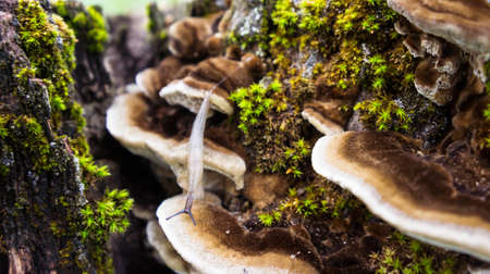 parasites: the old large dark gray stump grow moss green and fluffy brown and white mushrooms parasites brown shades, close-up, crawling slug next growing fungus parasite Stock Photo