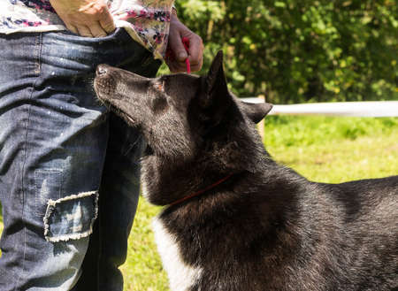 obedecer: one dog a hybrid, with the man in park, looks to him in a pocket in hope for a delicacy