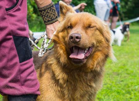 obedecer: un perro de color rojo un híbrido con la persona en el parque en el entrenamiento de perros, guiños