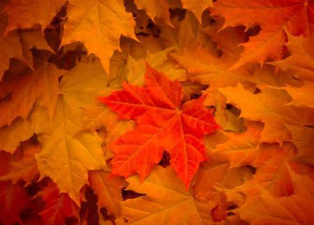 feuilles d'érable fleurs jaunes, orange et rouges avec grand fond clair