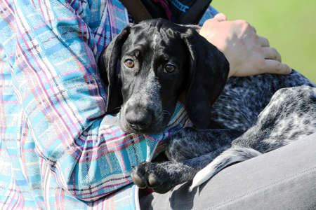 a man in a plaid blue jacket is holding a small black puppy german shorthaired pointer, kurtshaar, dog has sad and frightened eyes, seeks protection