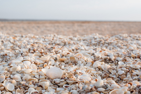 The background of the set of seashells on the beach.