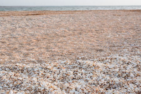 The background of the set of seashells lying on the beach is chaotic. Stock Photo