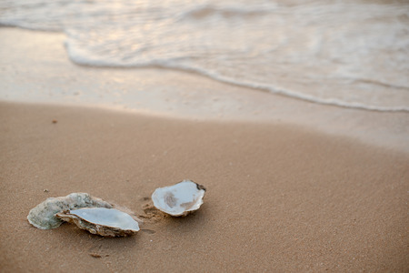 Oyster shells on the surf line with sand on the sea beach, as a concept of summer holidays, sea resort, spa.
