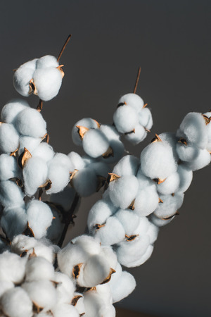 A bouquet of cotton on a wooden table. Standard-Bild - 121844176